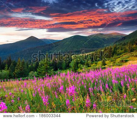 美丽的秋天的风景和粉红色的花朵在山里.日出.