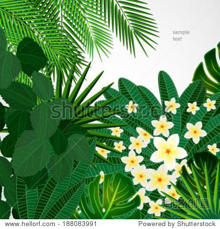 plumeria鲜花和热带树叶.