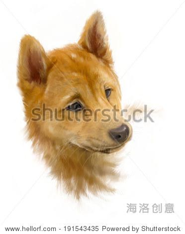 布朗日本柴犬,白色小狗的肖像,画,粗略的一笔绘画