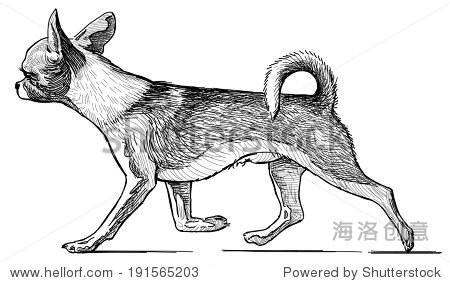 跑步膝狗-动物/野生生物,自然-海洛创意正版图片,视频