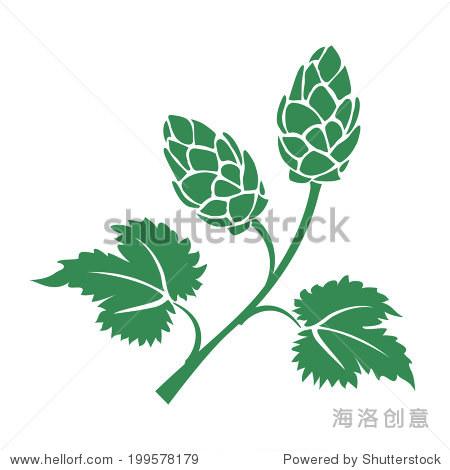 绿色的向量轮廓啤酒花图标用树叶和锥花用于酿造工业