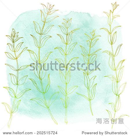 组花画水彩背景循环.树枝和树叶,桉树