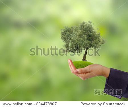 橄榄树的手作为礼物