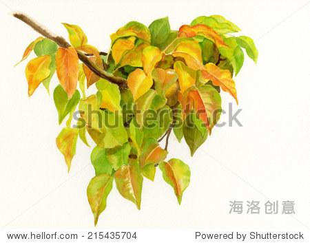 秋天梨树开花