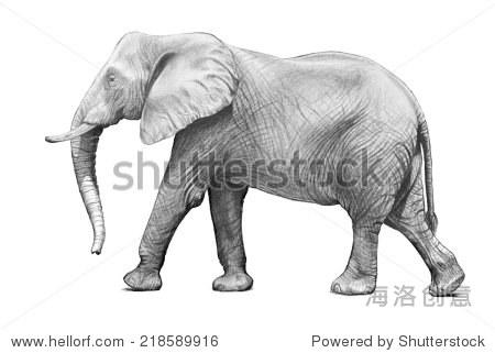 大象手绘草图孤立在白色背景,大象有大耳朵,鼻子和皮肤起皱纹插图.