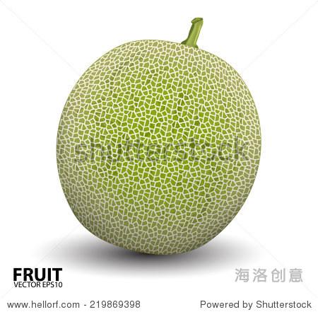 现实的矢量插图西瓜和哈密瓜甜瓜.矢量图