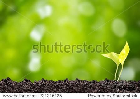 树苗在绿色植物发芽散景背景