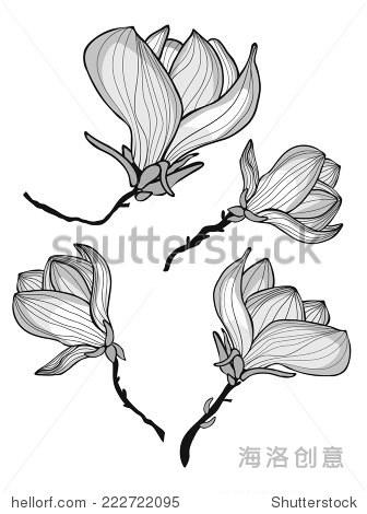 一个美丽的木兰花集合.矢量图