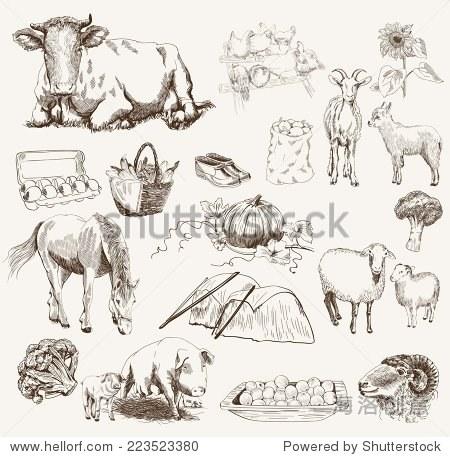 农场动物素描对象家畜繁育植物