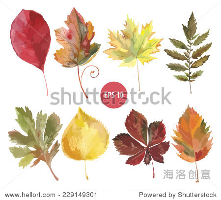 组向量水彩树叶,秋天的叶子