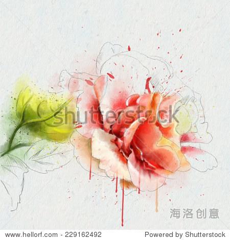 美丽的水彩画玫瑰,素描