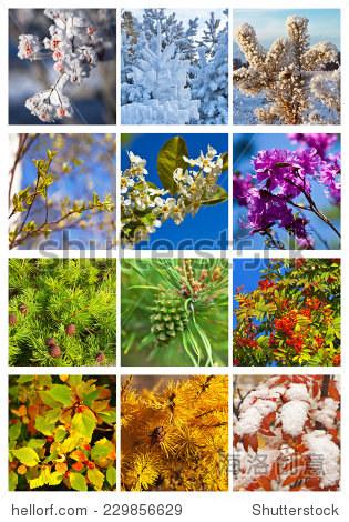 拼贴画 12个月 树在不同的季节 日历 五颜六色的花卉背景 背景 素材,