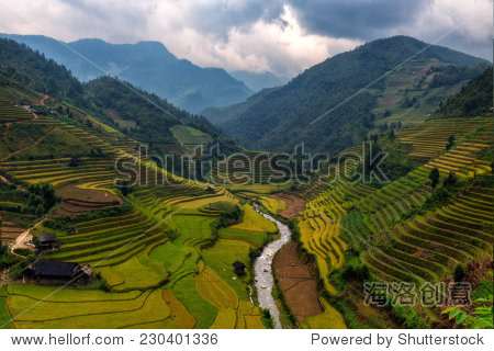 rice terrace, vietnam