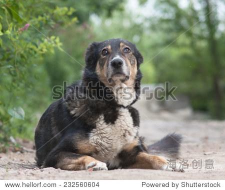 流浪狗躺在地上 - 动物/野生生物 - 站酷海洛创意正版
