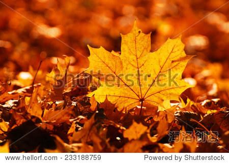 秋天的落叶-自然-站酷海洛创意正版图片,视频,音乐-.