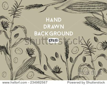 手绘背景,小麦和玉米