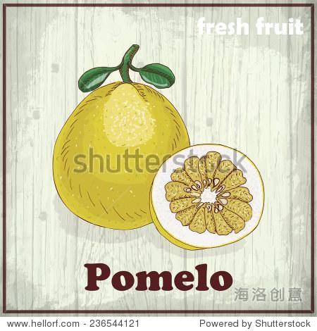 新鲜水果素描背景.手绘插图的柚子