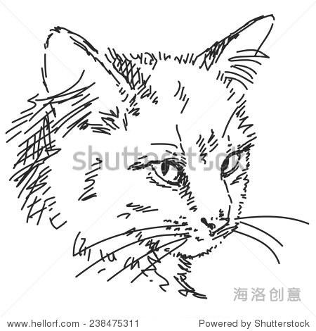 素描的猫头,手绘插图向量,孤立
