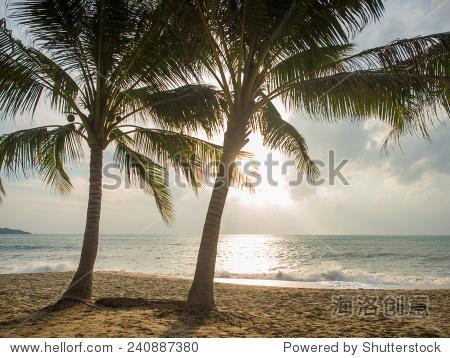 在泰国苏梅岛椰子树在沙滩上