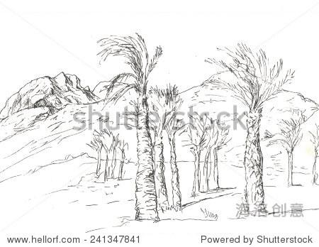 棕榈手绘线稿景观