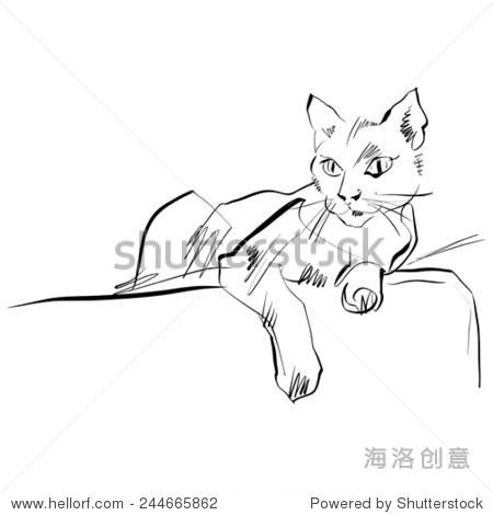 黑白手绘猫,猫.