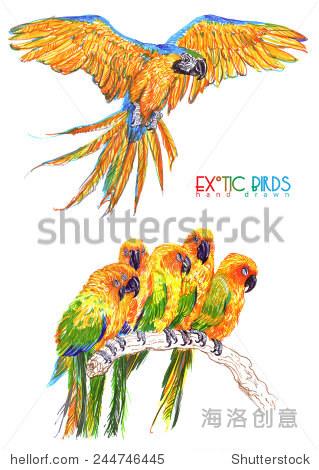 奇异鸟手工绘制 - 动物/野生生物,自然 - 站酷海洛,,.