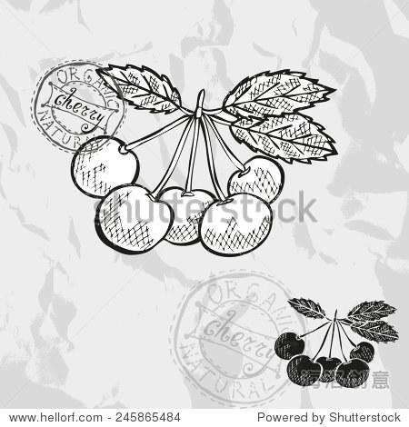 手绘装饰樱桃水果,设计元素.可用于卡片,邀请,礼品包装,印刷,剪贴簿.