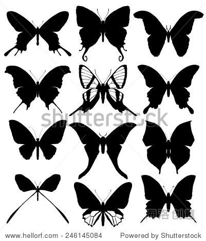 蝴蝶剪影孤立在白色背景.矢量图