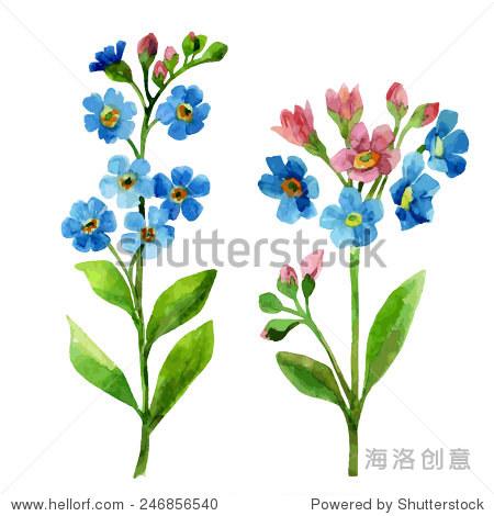 水彩蓝花.勿忘我手绘插图