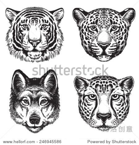黑白矢量线画的野生动物面临:猎豹,豹子,老虎和狼
