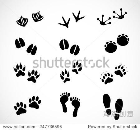 动物和人类的爪子和足迹组向量