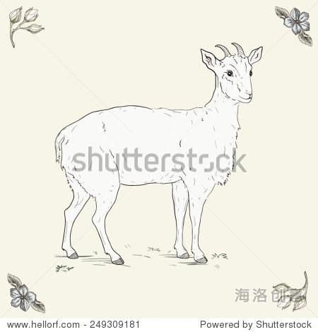 手绘的山羊