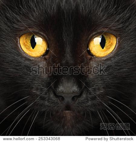 黑猫的眼睛宏动物背景 - 动物/野生生物,背景/素材