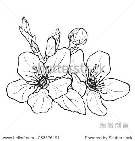 樱花简笔画图片