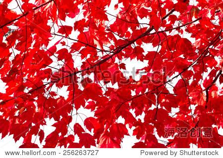 鲜艳的红色秋天树叶背景纹理模式