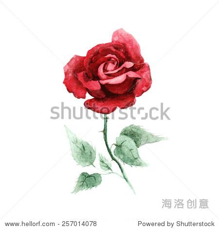 水彩手绘向量玫瑰.