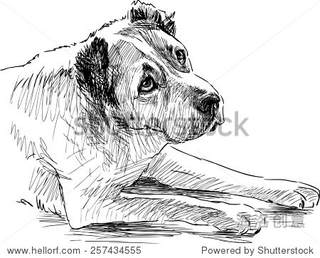 素描的悲伤的狗 - 动物/野生生物,自然 - 站酷海洛,,.