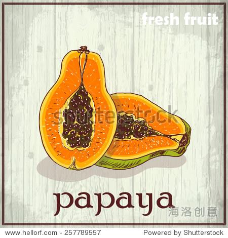 手绘插图的木瓜.新鲜水果素描背景.矢量插图设计