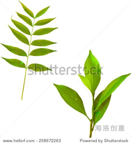 矢量图的绿色热带叶子在树枝上.年轻的植物叶子,春天树叶,矢量插图