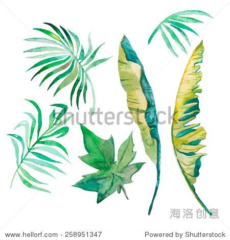 水彩棕榈叶,香蕉叶子,木瓜叶.热带的树叶.