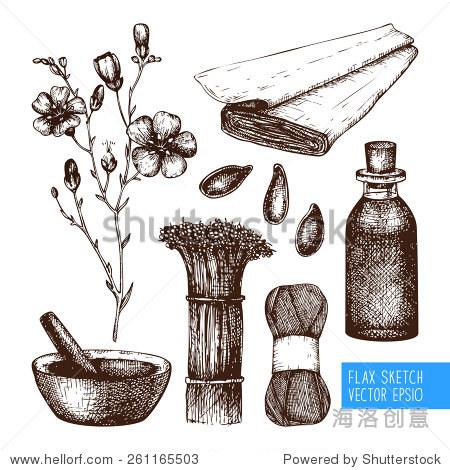 向量组墨水手绘亚麻插图孤立在白色的.古董亚麻草图