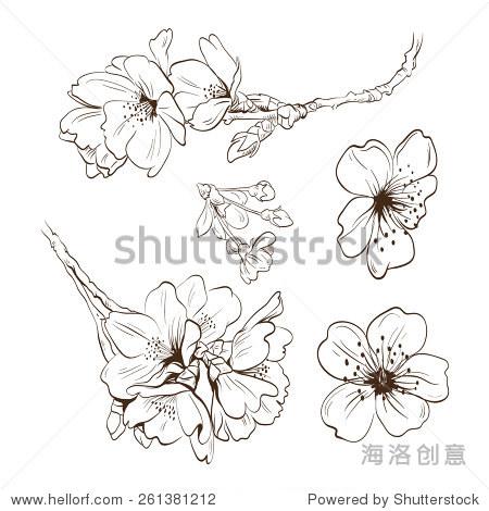 花朵手绘,矢量图-艺术