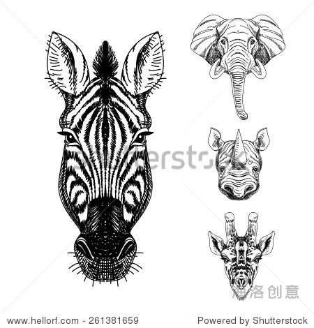 向量组手绘动物.的插图与大象