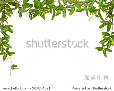 葡萄树的叶子小花孤立在白色背景帧 - 背景/素材,自然