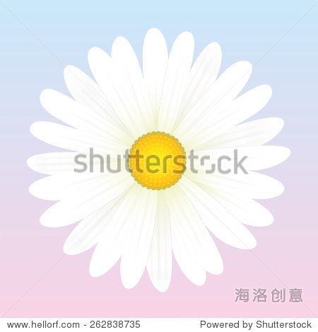 白色的雏菊花.孤立的矢量插图浅粉蓝色背景.