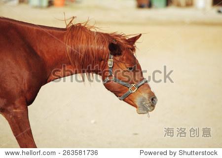 可爱的马走在牧场 - 动物/野生生物,自然 - 站酷海洛