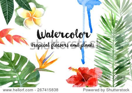 手绘水彩热带植物 - 背景/素材,自然 - 站酷海洛创意