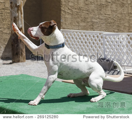 养狗爪子在空中击掌 - 动物/野生生物,公园/户外
