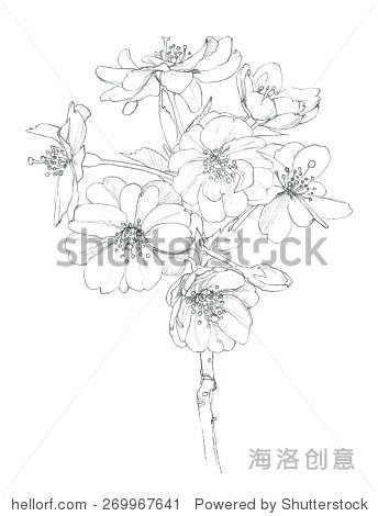 盛开的樱桃树,铅笔绘图