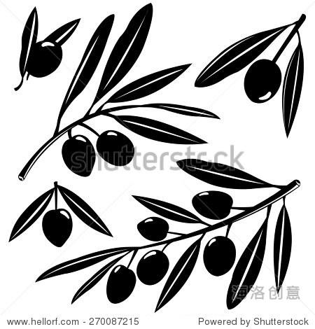 黑白剪影的橄榄树枝水果在白色背景